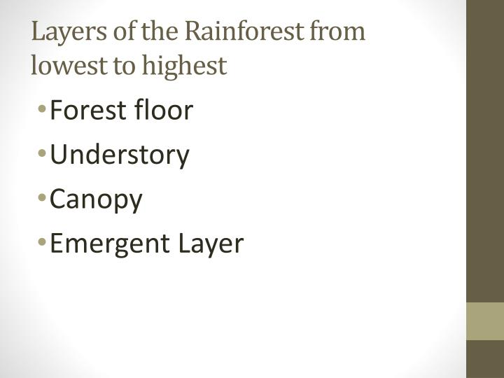 Layers of the rainforest from lowest to highest