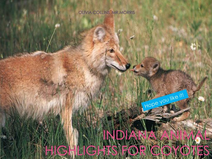 INDIANA ANIMAL HIGHLIGHTS FOR COYOTES