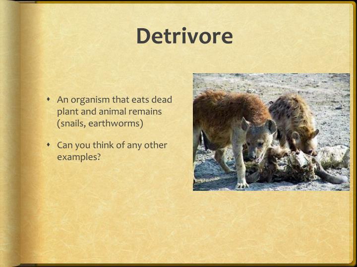 Detrivore