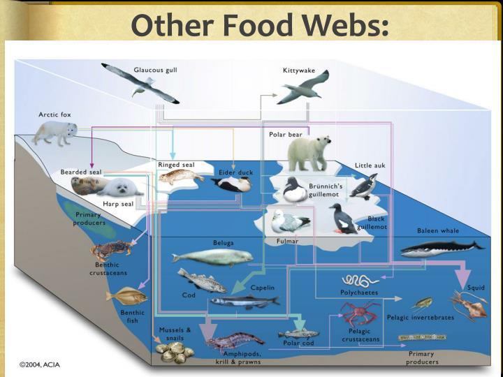 Other Food Webs: