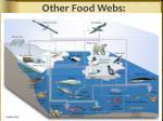 other food webs