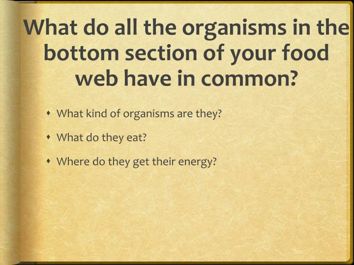 What do all the organisms in the bottom section of your food web have in common?