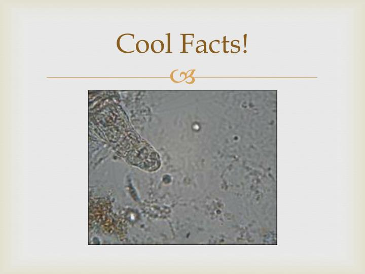 Cool Facts!