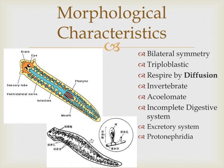 Morphological Characteristics