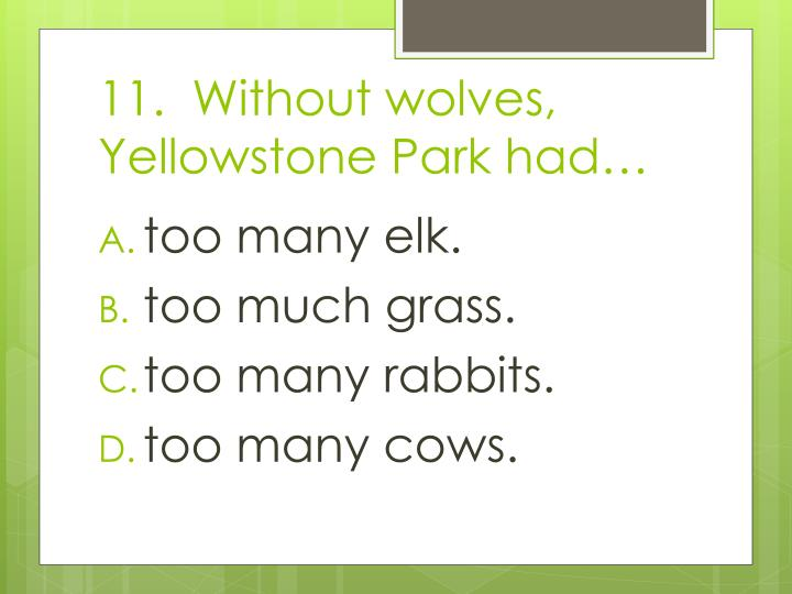 11.  Without wolves, Yellowstone Park had…