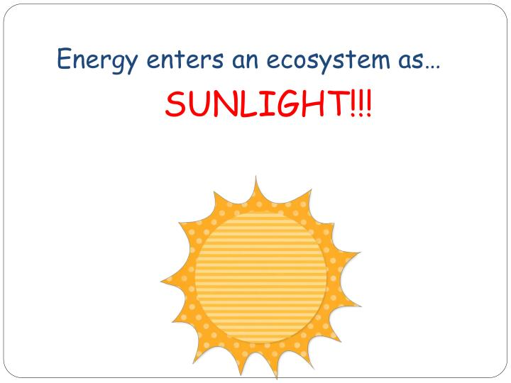 Energy enters an ecosystem as…