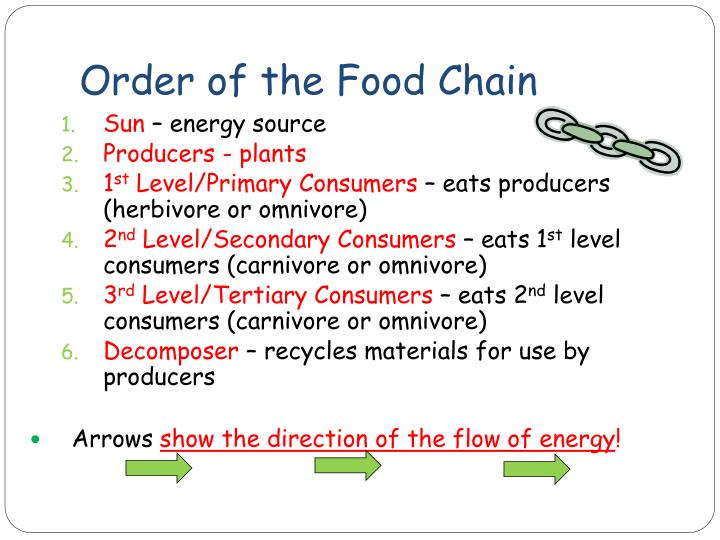 Order of the Food Chain