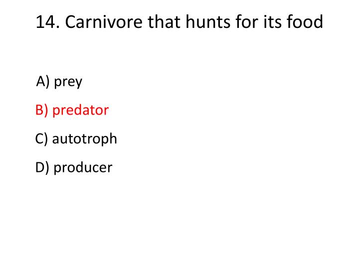 14.Carnivore that hunts for its food