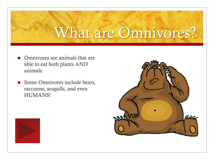 What are Omnivores?