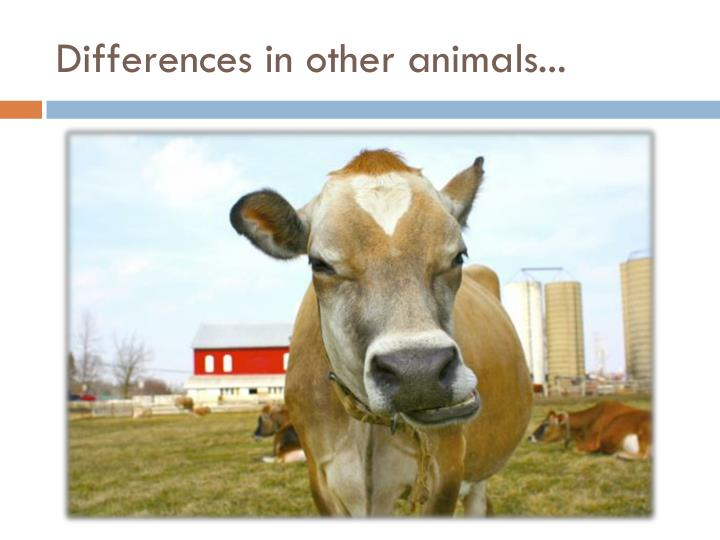 Differences in other animals...