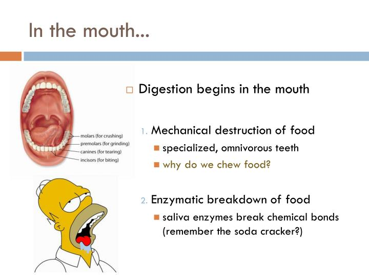 In the mouth...