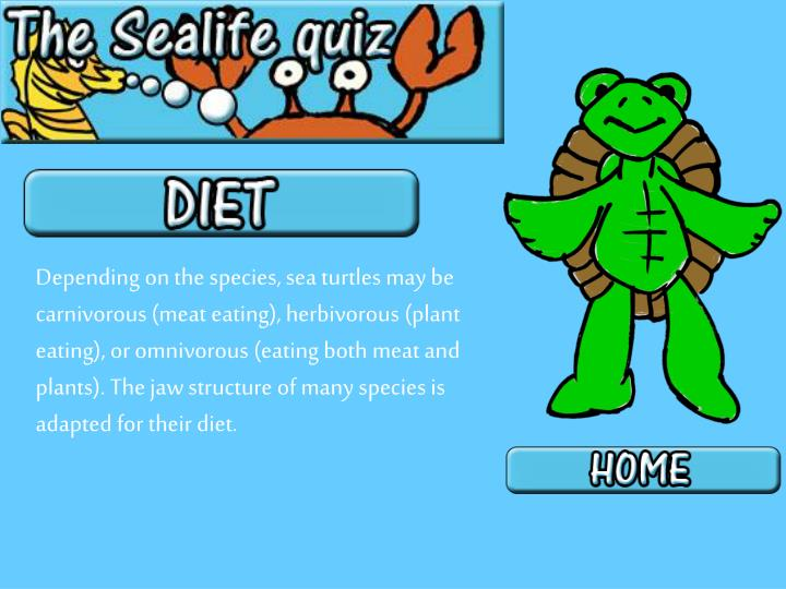 Depending on the species, sea turtles may be carnivorous (meat eating), herbivorous (plant eating), or omnivorous (eating both meat and plants). The jaw structure of many species is adapted for their diet.