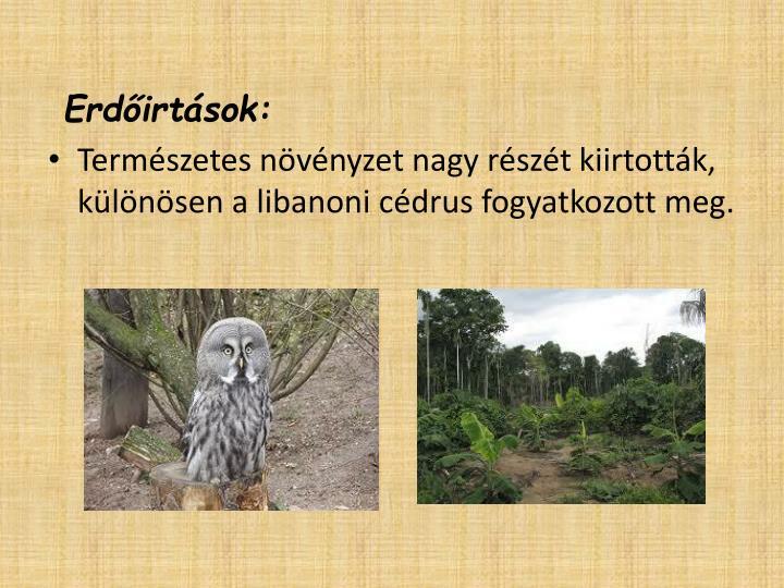 Erdőirtások:
