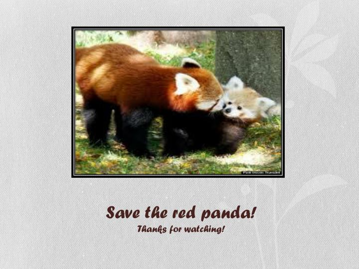 Save the red panda!