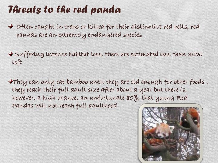 Threats to the red panda