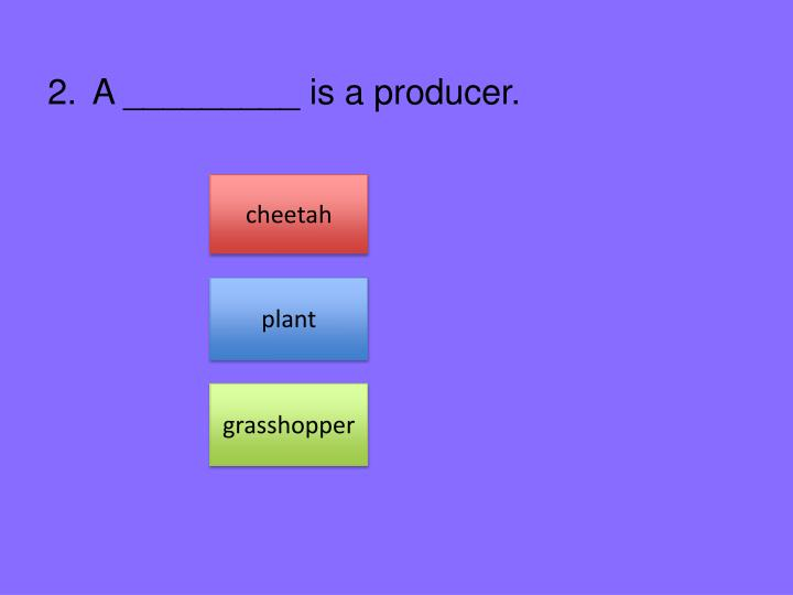 A _________ is a producer.