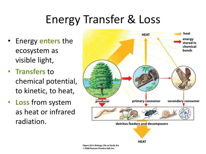 Energy Transfer & Loss