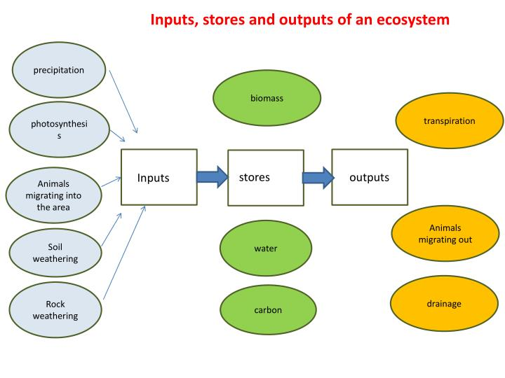 Inputs, stores and outputs of an ecosystem