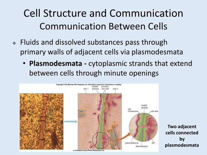 Cell Structure and Communication