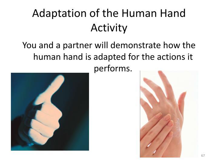 Adaptation of the Human Hand Activity