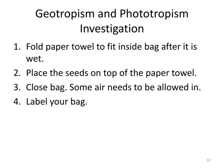 Geotropism and Phototropism Investigation