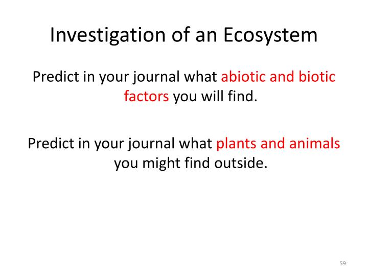 Investigation of an Ecosystem