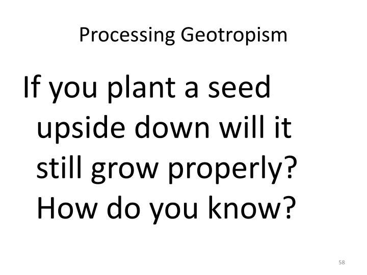 Processing Geotropism