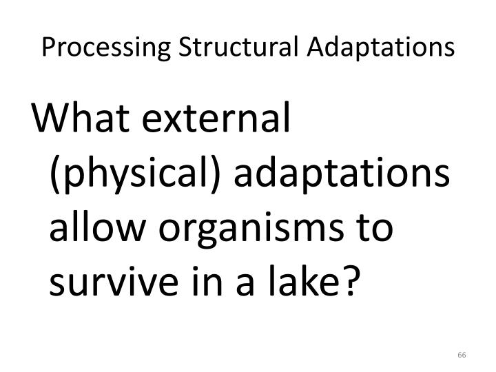Processing Structural Adaptations