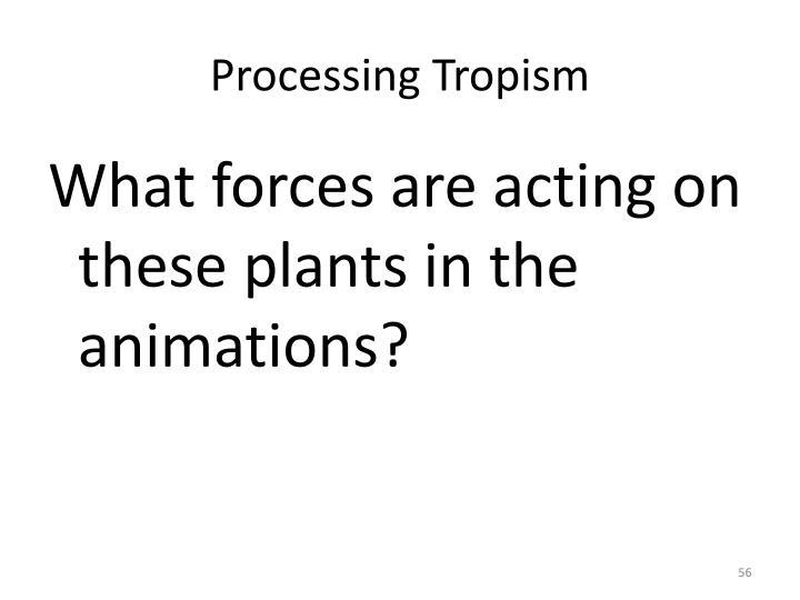 Processing Tropism