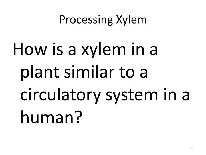 Processing Xylem