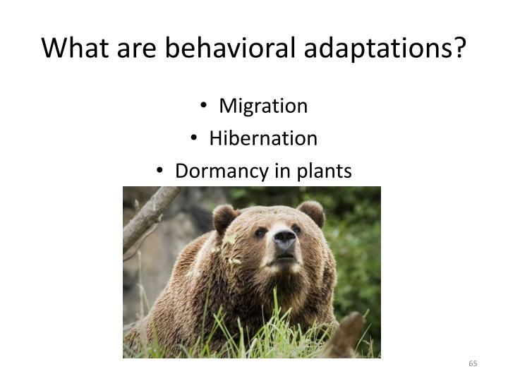 What are behavioral adaptations?