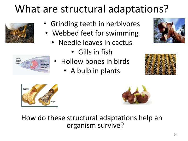 What are structural adaptations?