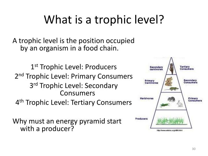 What is a trophic level?