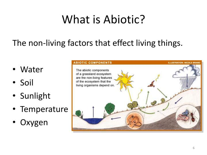 What is Abiotic?