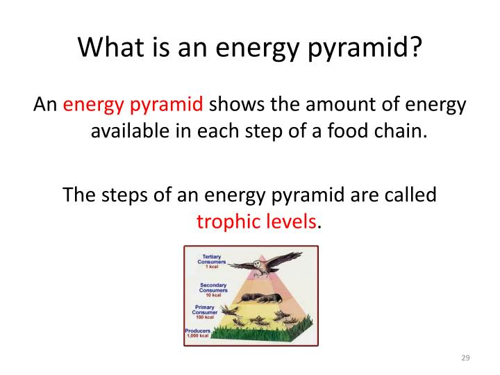 What is an energy pyramid?