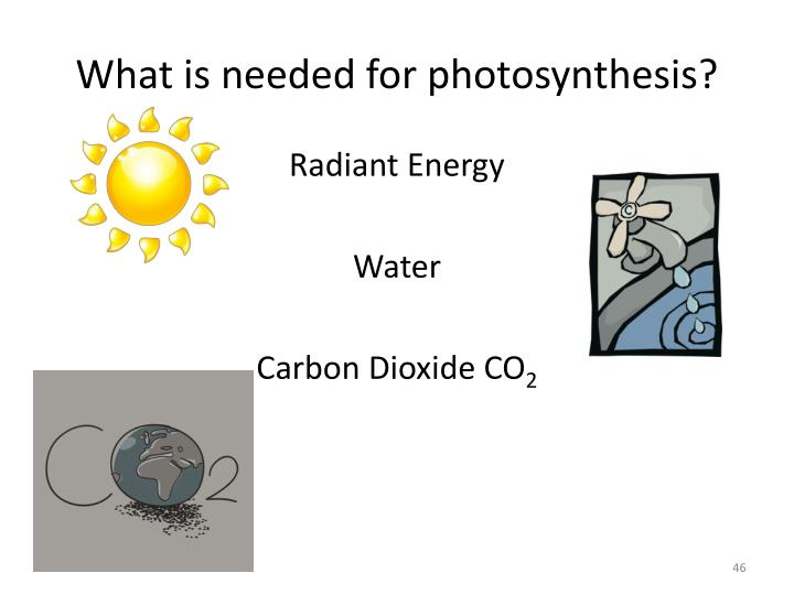 What is needed for photosynthesis?