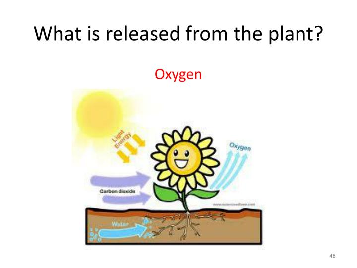 What is released from the plant?