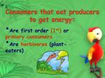 consumers that eat producers to get energy