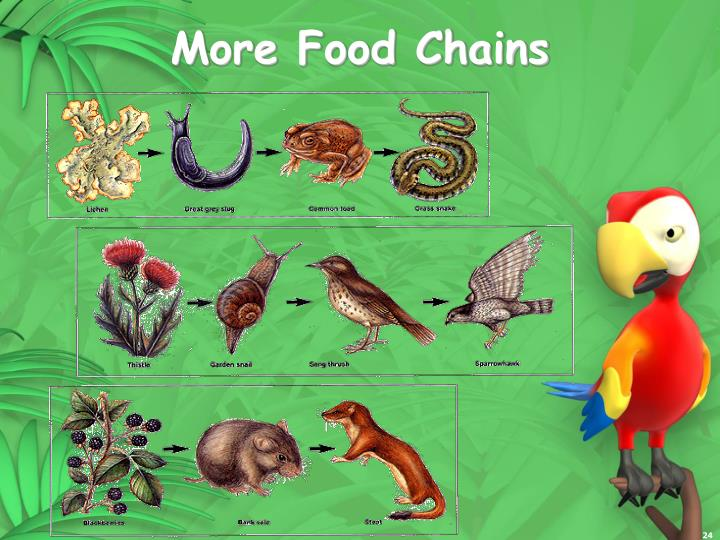 More Food Chains