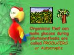 organisms that can make glucose during photosynthesis are called producers or autotrophs