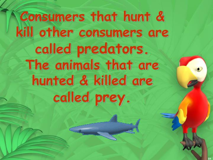 Consumers that hunt & kill other consumers are called
