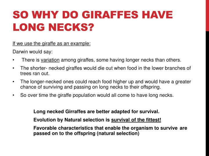 So why do Giraffes have long necks?