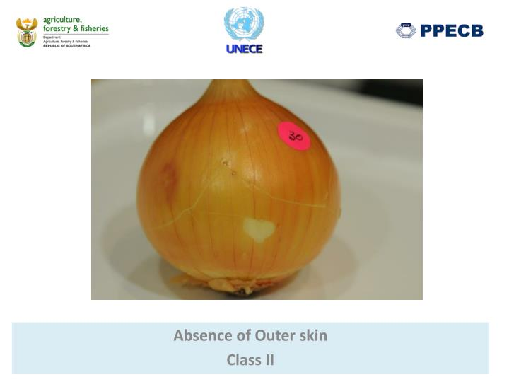 Absence of Outer skin