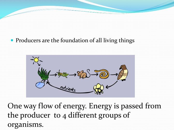 Producers are the foundation of all living things