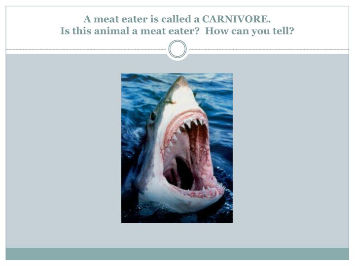 A meat eater is called a CARNIVORE.