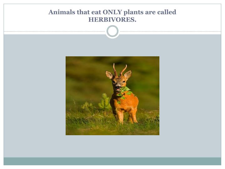 Animals that eat ONLY plants are called