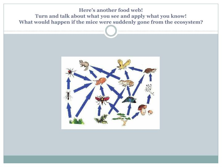 Here's another food web!