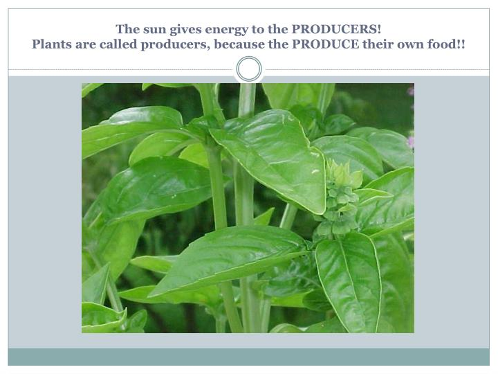 The sun gives energy to the PRODUCERS!