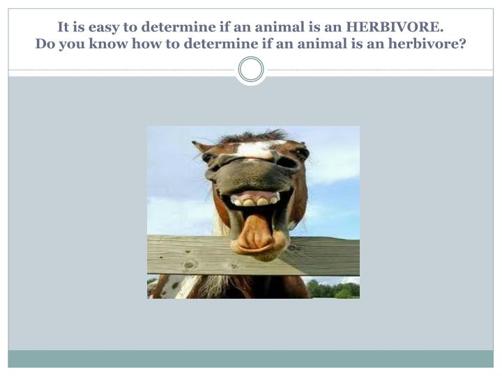 It is easy to determine if an animal is an HERBIVORE.