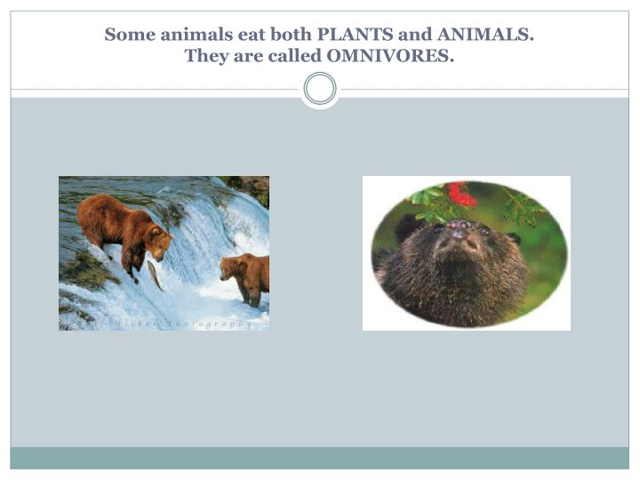 Some animals eat both PLANTS and ANIMALS.